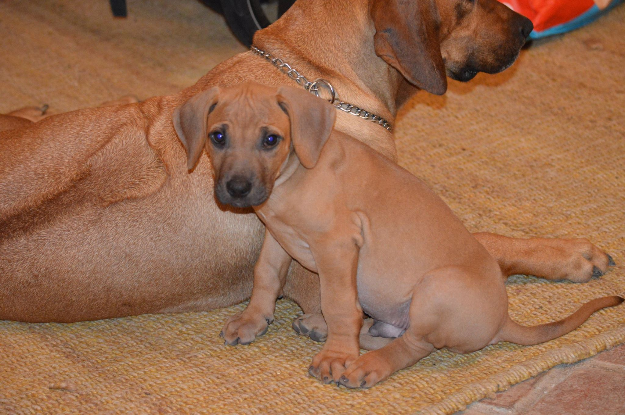 Sierra Puppy