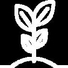 Topraktan çıkan yapraklı filiz resmi