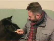 Botti di Capodanno:Nessun interesse per i nostri amici Animali.