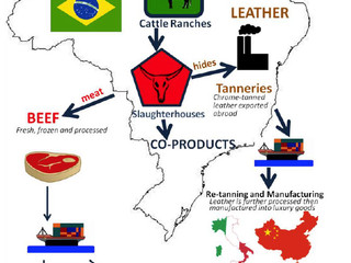Cattle Production and Environment Concerns in Brazil
