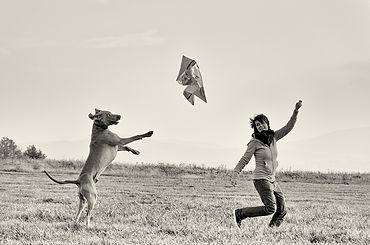 Hunde Ängste Healy.jpg