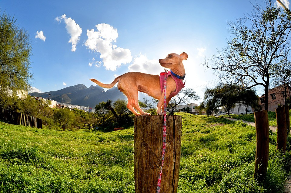 SideKick Dog Training | Private Dog Training | Milwaukee WI