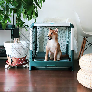 01_Diggs_Medium_Dog_Crate_Shiba_1024x102