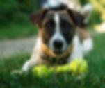 SideKick Dog Training | Private Dog Training Milwaukee WI