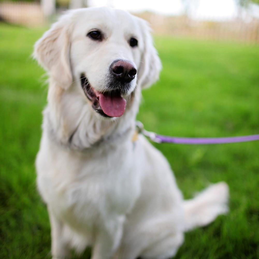 SideKick Dog Training   Private Training Milwaukee WI