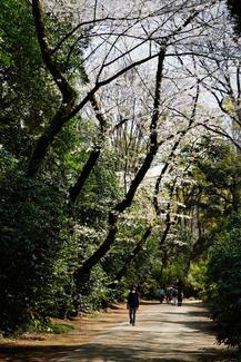 Biking near a shrine