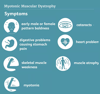 mus dystrophy.png