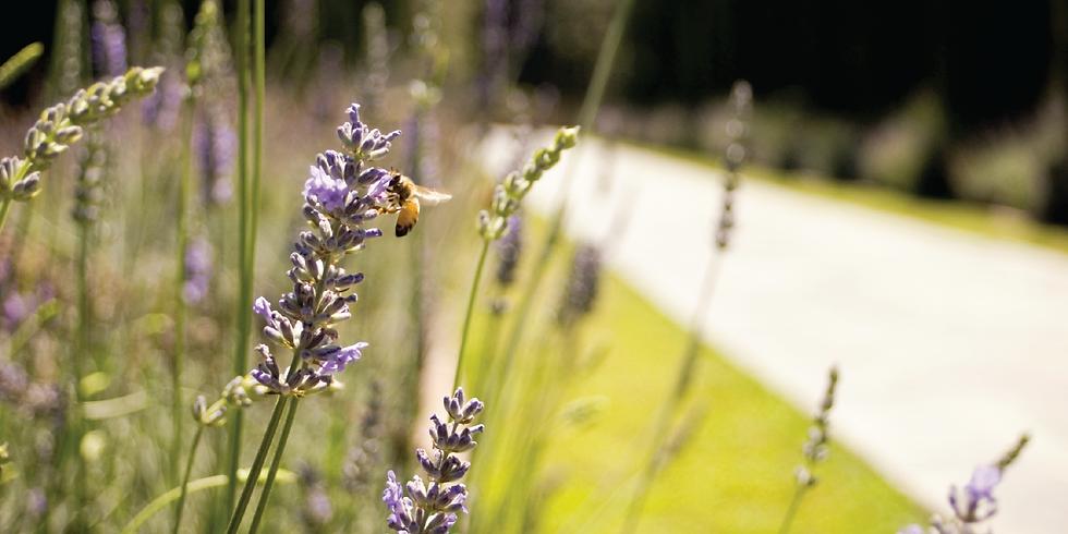 Cancelled - Eagle Creek Greenway Pollinator Tour