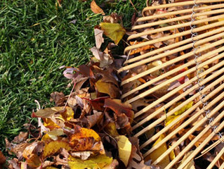 Why Do I Need To Hire a Leaf Removal Service to Rake My Leaves?