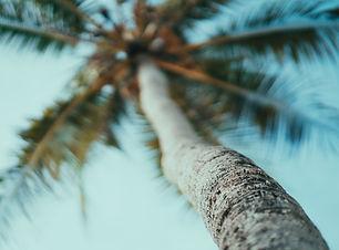 Un palmier sur les plages de Zanzibar en
