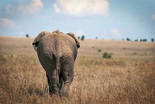 Elephant de dos dans le Serengeti Tanzan