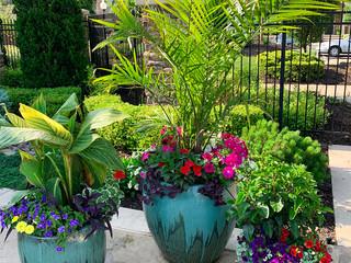 HOA Pool Deck Seasonal Color Landscaping