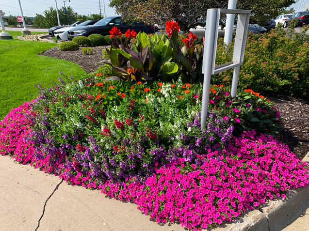 BMW Dealsership Seasonal Color Landscaping