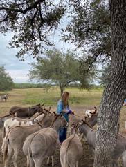 Barnhart Q5 Ranch Donkeys.jpg