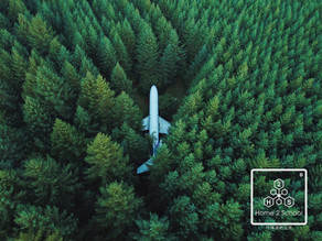Fly in the forest.