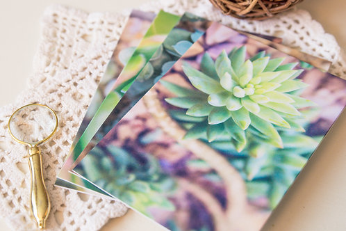 Succulents Greeting Cards
