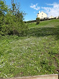 Field in Ketley