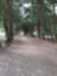 Yew Avenue in Apley Woods