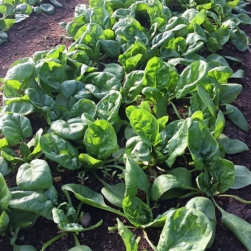 Spinach, 1/3 lb