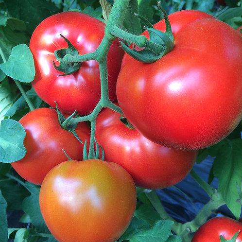 Vine Ripe Tomatoes, lb