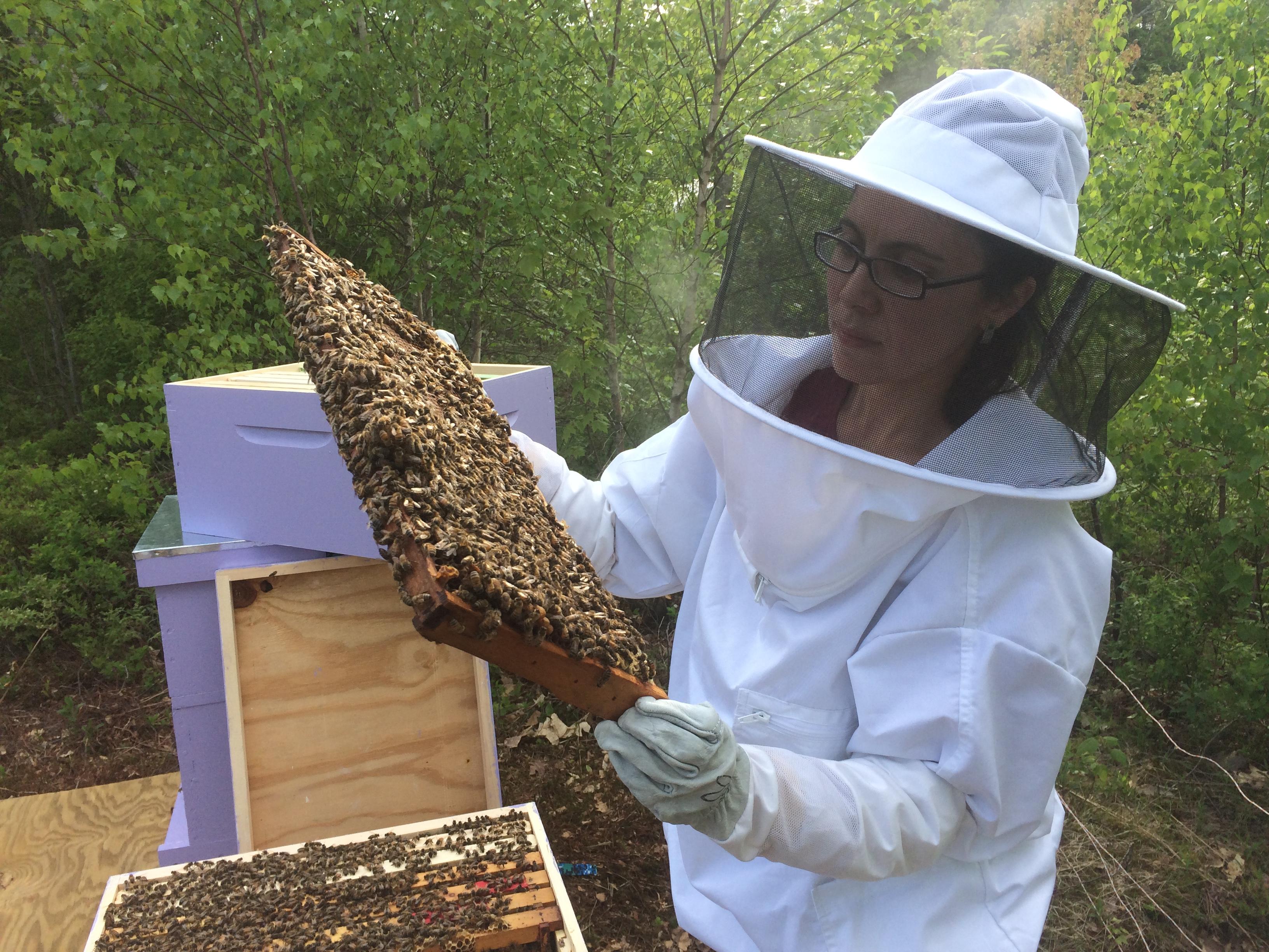 Renata inspecting her bees