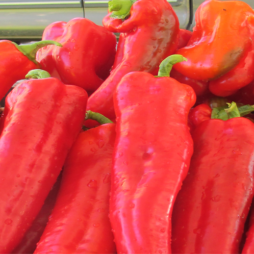 Italian Roasting Pepper, lb
