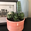 Thumbnail: Coral Glazed Succulent Plant Pot