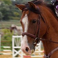 cheval proverbe.jpg