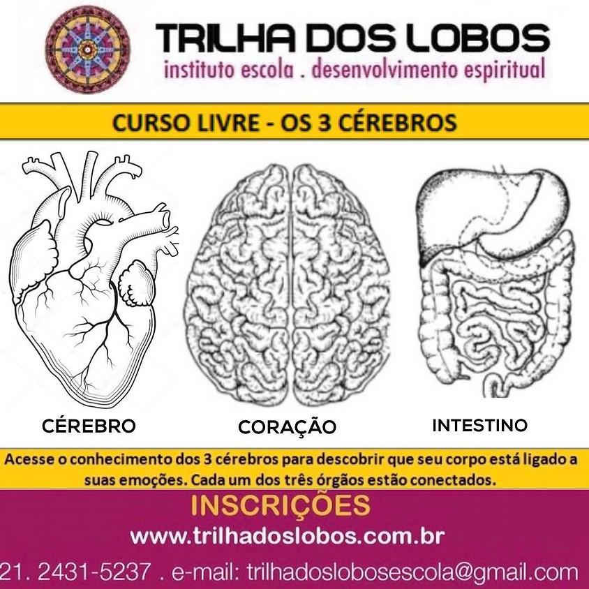 Curso Online:  Os 3 Cérebros