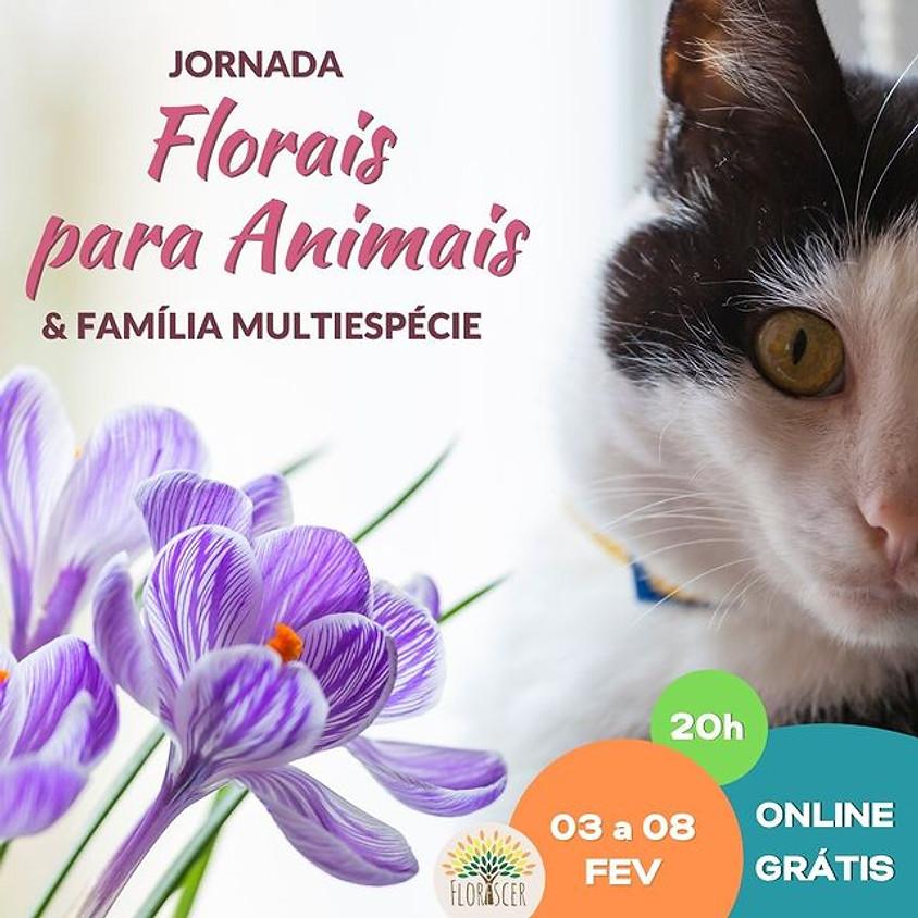Jornada Florais para animais & Família Multiespécie