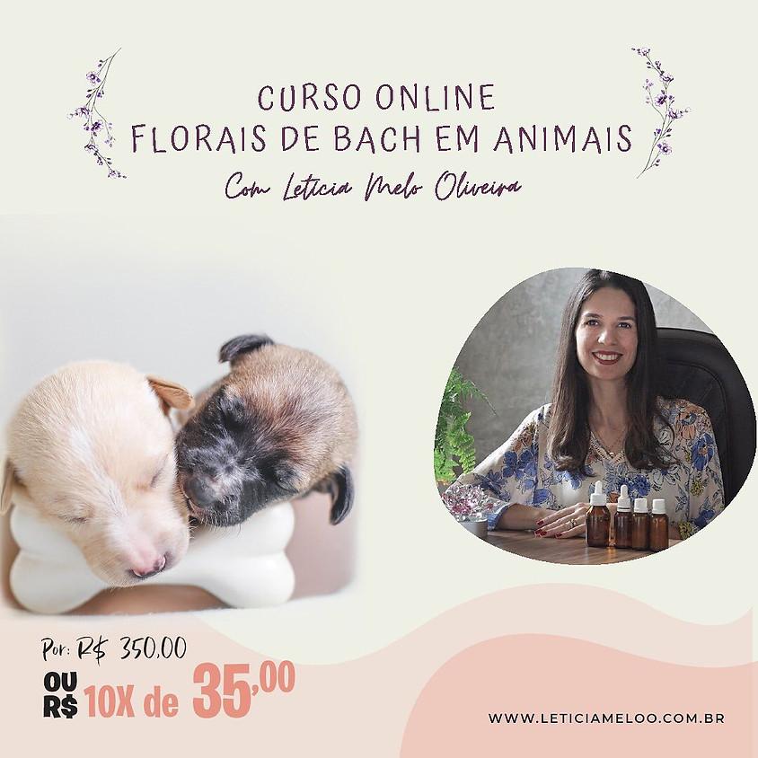 Curso Online: Florais de Bach em Animais