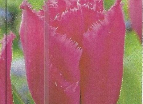 Carrousel Tulips