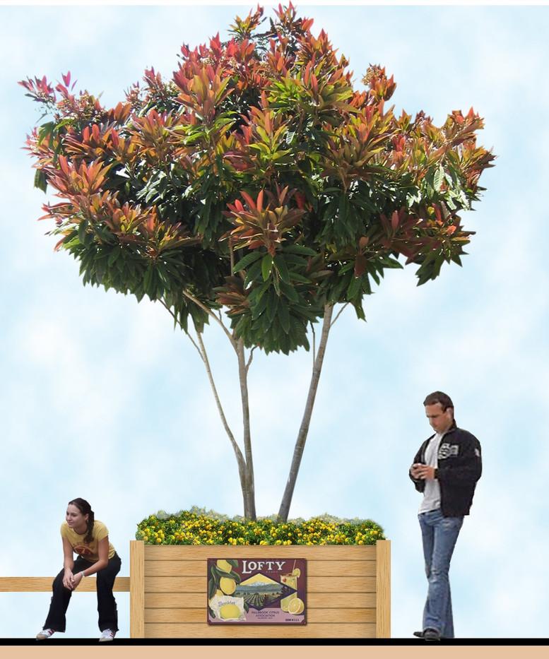 04-Orange Park Planter.jpg