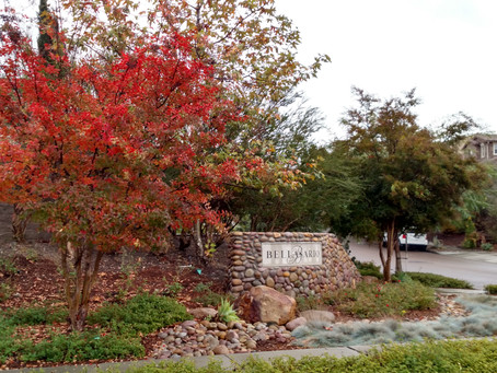 A lovely show of fall colors at Stonebridge Estates!