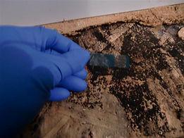 sample of fungus being taken