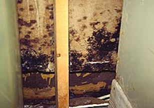 Fungus grows on the inside of damp walls