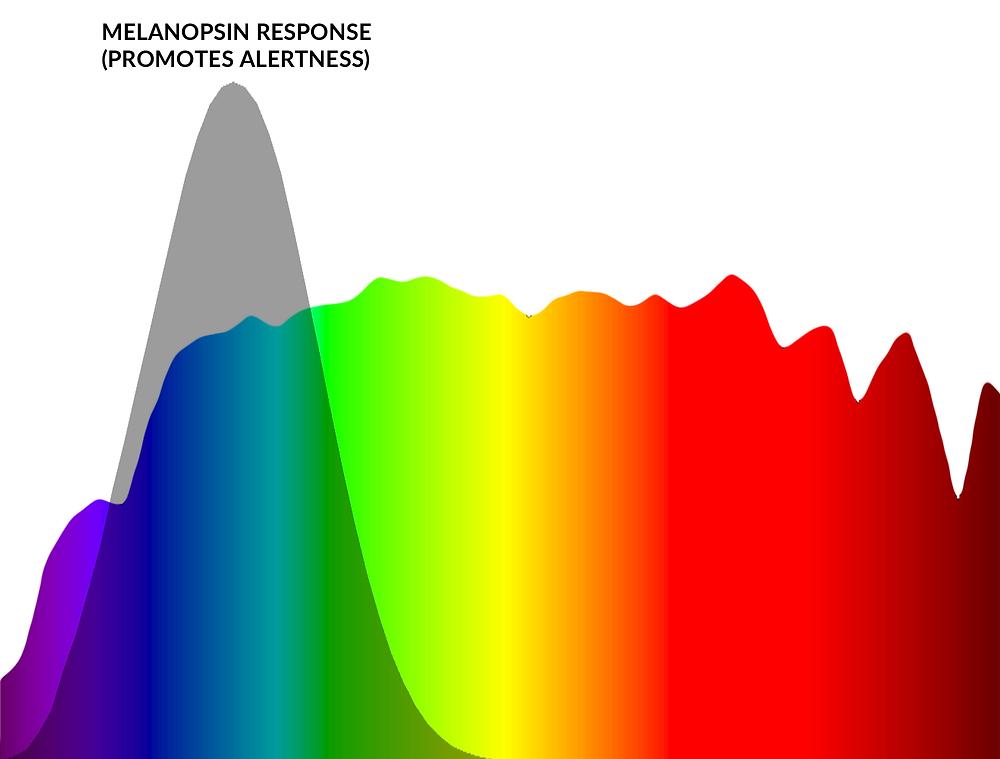 Melanopsin Response (Promotes Alertness) - Sleep & Blue (Artificial) Light