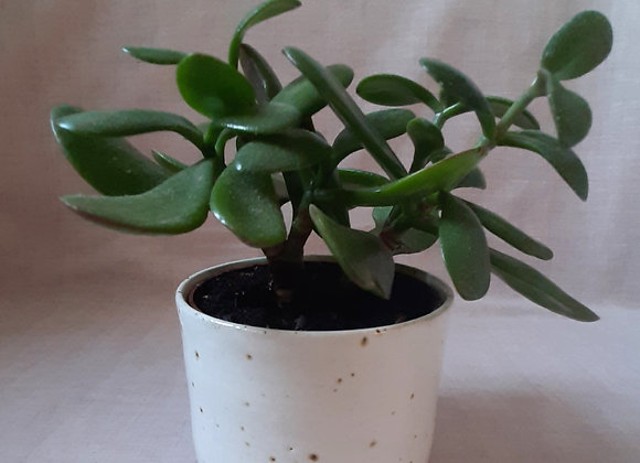 White speckled Planter