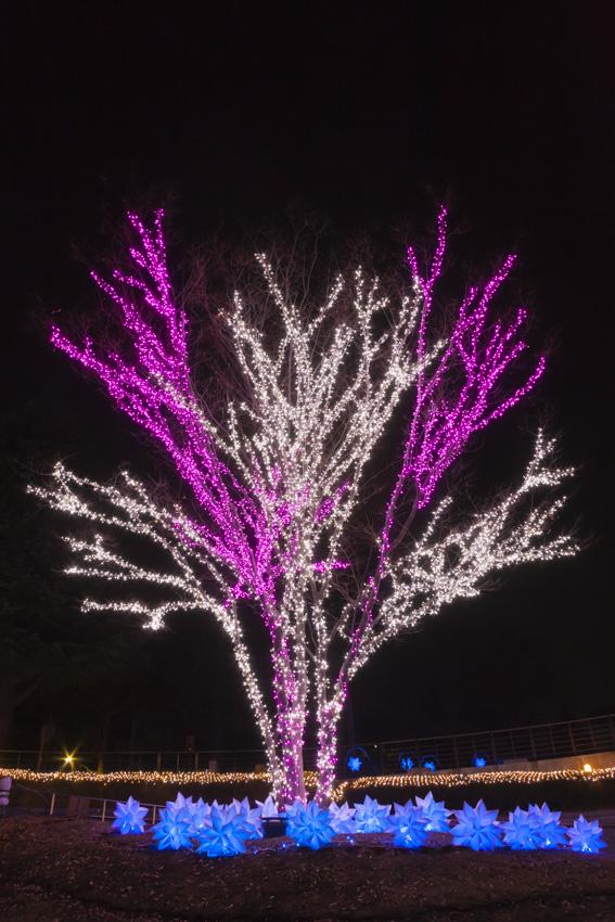 illumination[Hodogaya_Park]_30_1.jpg