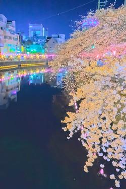 cherry_blossoms_night[Oooka_River]_58.jpg