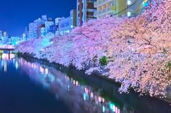cherry_blossoms_night[Oooka_River]_33.jpg