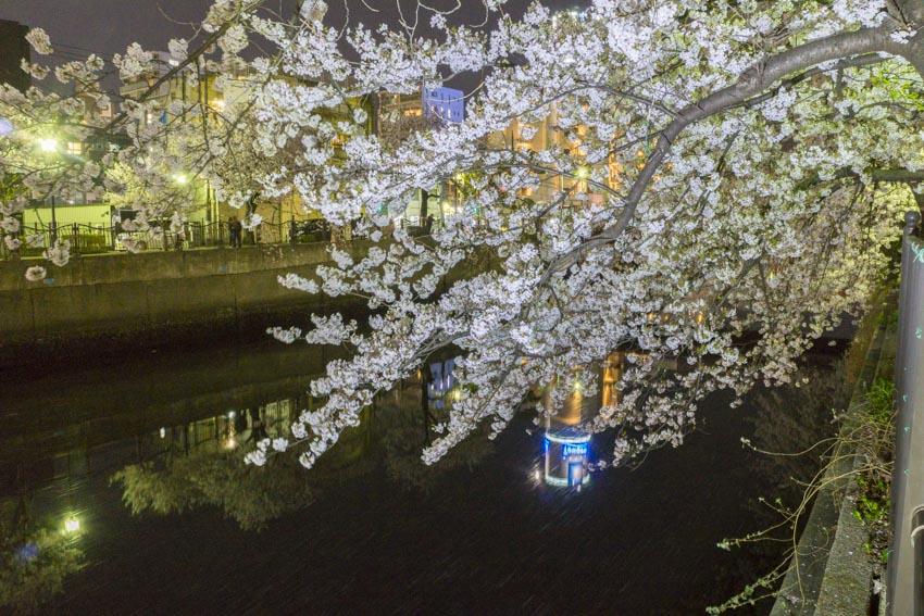 170410夜桜153