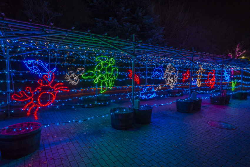 illumination[Hodogaya_Park]_13_1.jpg
