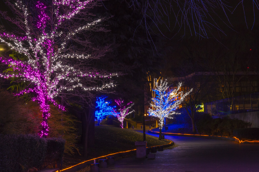 illumination[Hodogaya_Park]_41_2.jpg