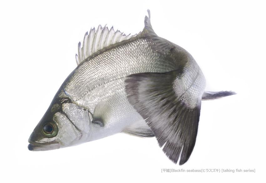 sea-bass0085_P.jpg