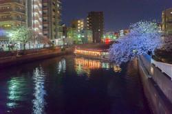 170410夜桜38