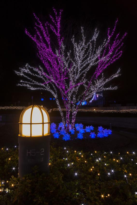 illumination[Hodogaya_Park]_30.jpg