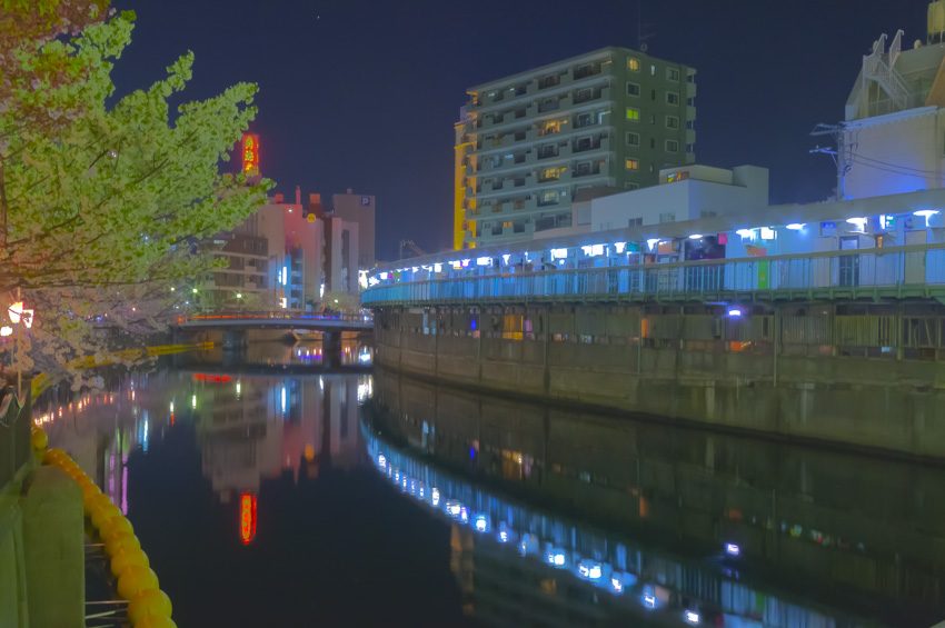 cherry_blossoms_night[Oooka_River]_08.jpg