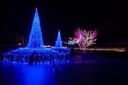 illumination[Hodogaya_Park]_27_1.jpg