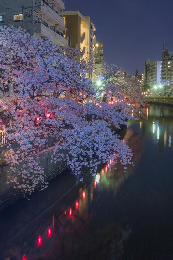 170410夜桜64